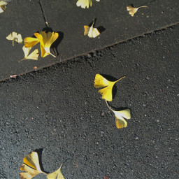 fall winter japan tokyo