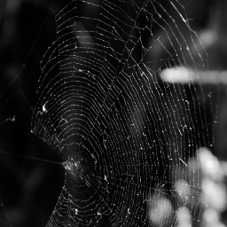 blackandwhite lines angels spiderweb bokeh freetoedit