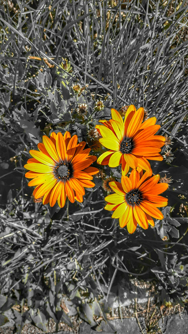 #hdrphotography #photooftheday #hdrimage #hdr_gallery #hdr_love #hdrfreak #hdrama  #hdrphoto #hdrfusion  #hdrstyles #hdr_edits  #FreeToEdit  #flowers #yellow