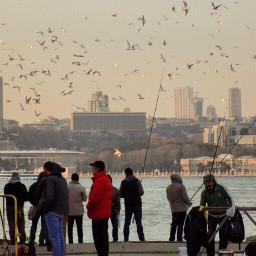 istanbul seagull sea sky sunset