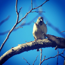 bird backyard nature photography winter