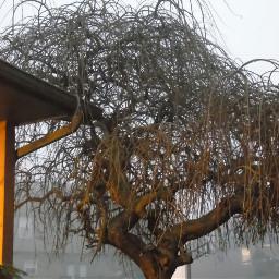 baretree freddykrueger nature photography winter