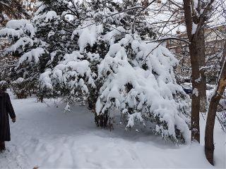 winter snow freetoedit
