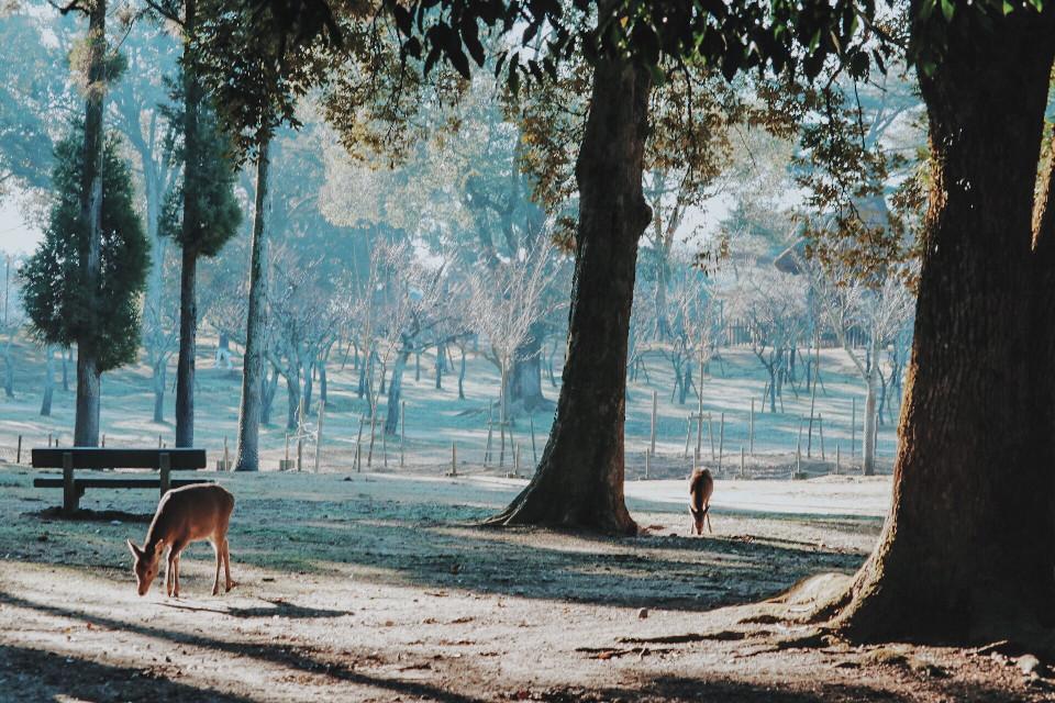 #nara #奈良 #奈良公园 #japan #FreeToEdit