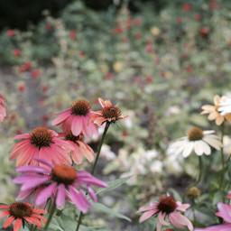dpcflowers freetoedit