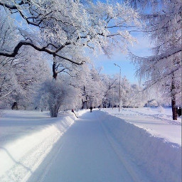 winterwonderland wintertime winteriscoming wintermorning winterlove