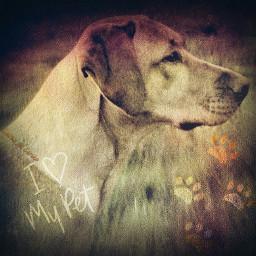 nutrish pets dog dogs animals