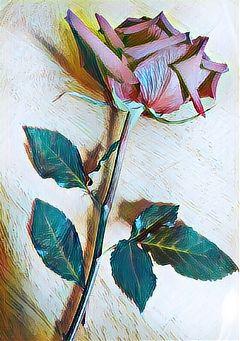 hazeeffect rose
