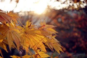 freetoedit nature sunset autumn leafes