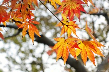 leaves nature bokeh autumn colorful freetoedit