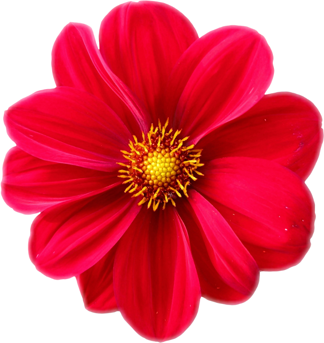 #flower #red#FreeToEdit