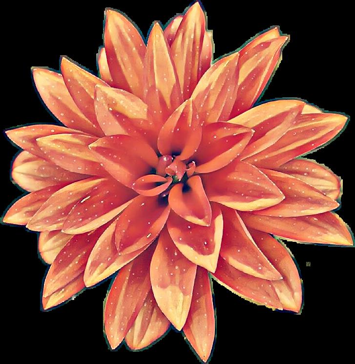 #ftestickers #flower #red#flowerstickers