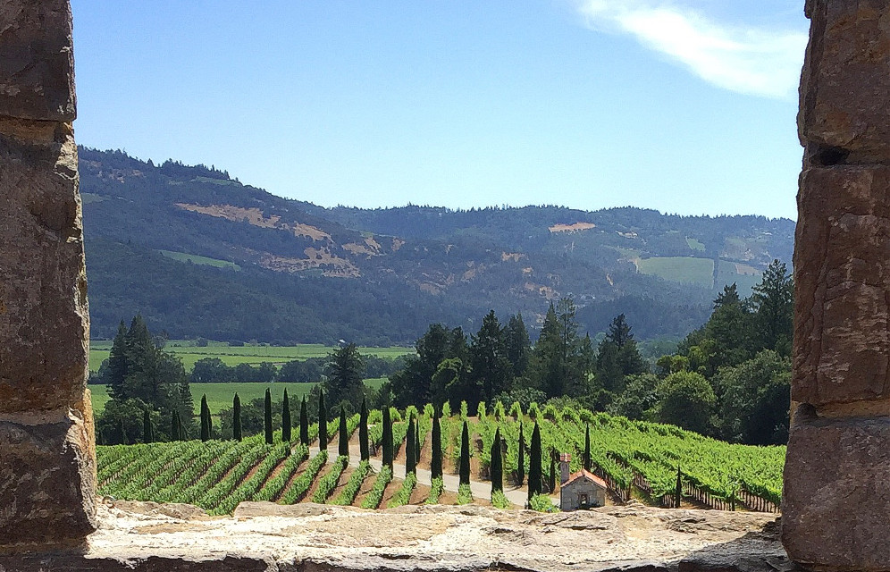 #throughthewindow #napavalley #beautiful #winery #grapevineyard #california #nature #sunnyday #dpcthroughthewindow