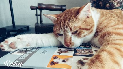photography petsandanimals cat