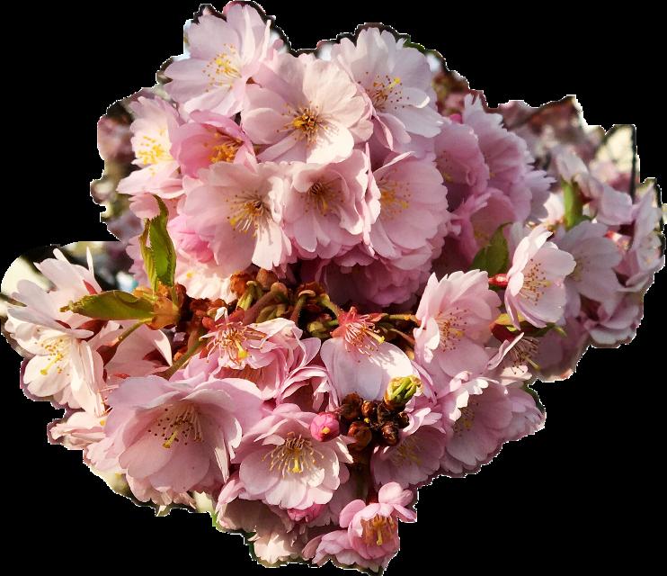 flower#FreeToEdit