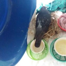 wdpbirdhouse birds nesting at balcony