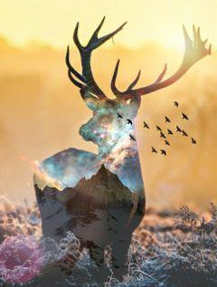 edited surreal fantasy nature doubleexposure